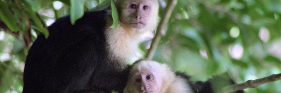 Costa Rica: Nature's Richness Revealed