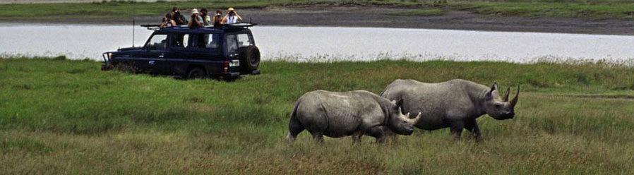 Boundless Journeys: Serengeti Migration Safari