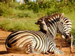 Tanzania Tours