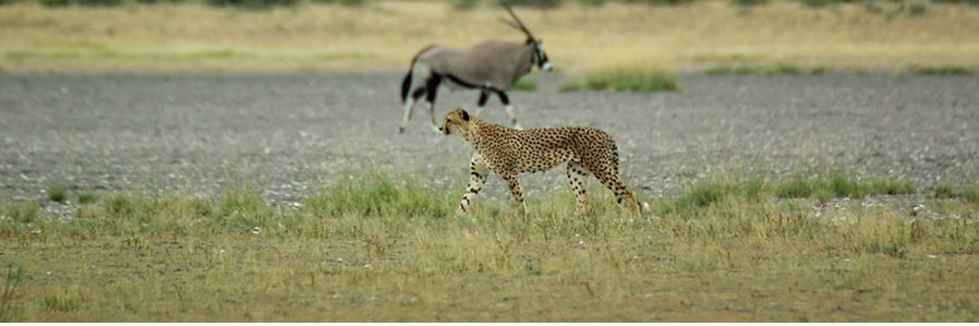 Botswana Kalahari Safari