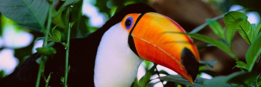 Boundless Journeys: Peru Amazon