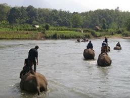 Elephant safari, Laos