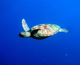 Snorkeling in Palau - Boundless Journeys