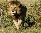 Ultimate Botswana and Victoria Falls Safari