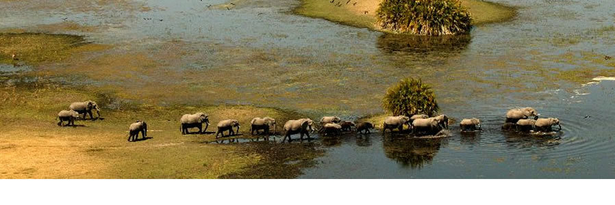 Ultimate Botswana and Victoria Falls Safari
