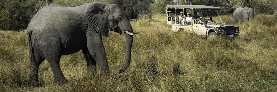 Botswana Wildlife Safaris in the Okavango Delta