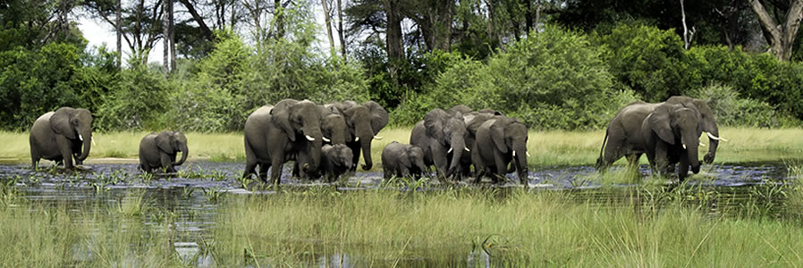 Botswana wildlife safaris